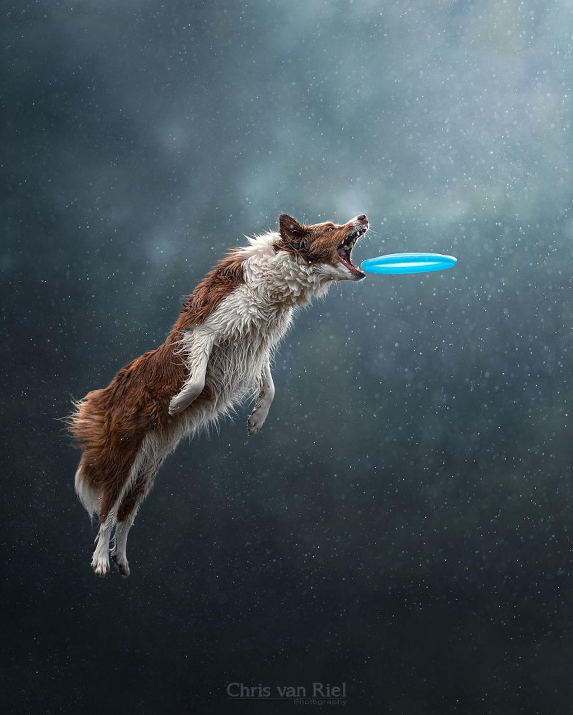 cane su blu vola