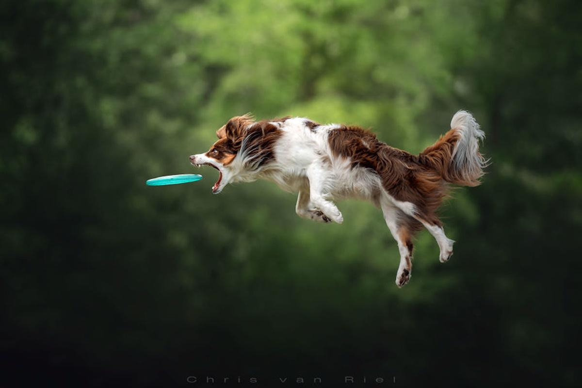 cane salta frisbee blu