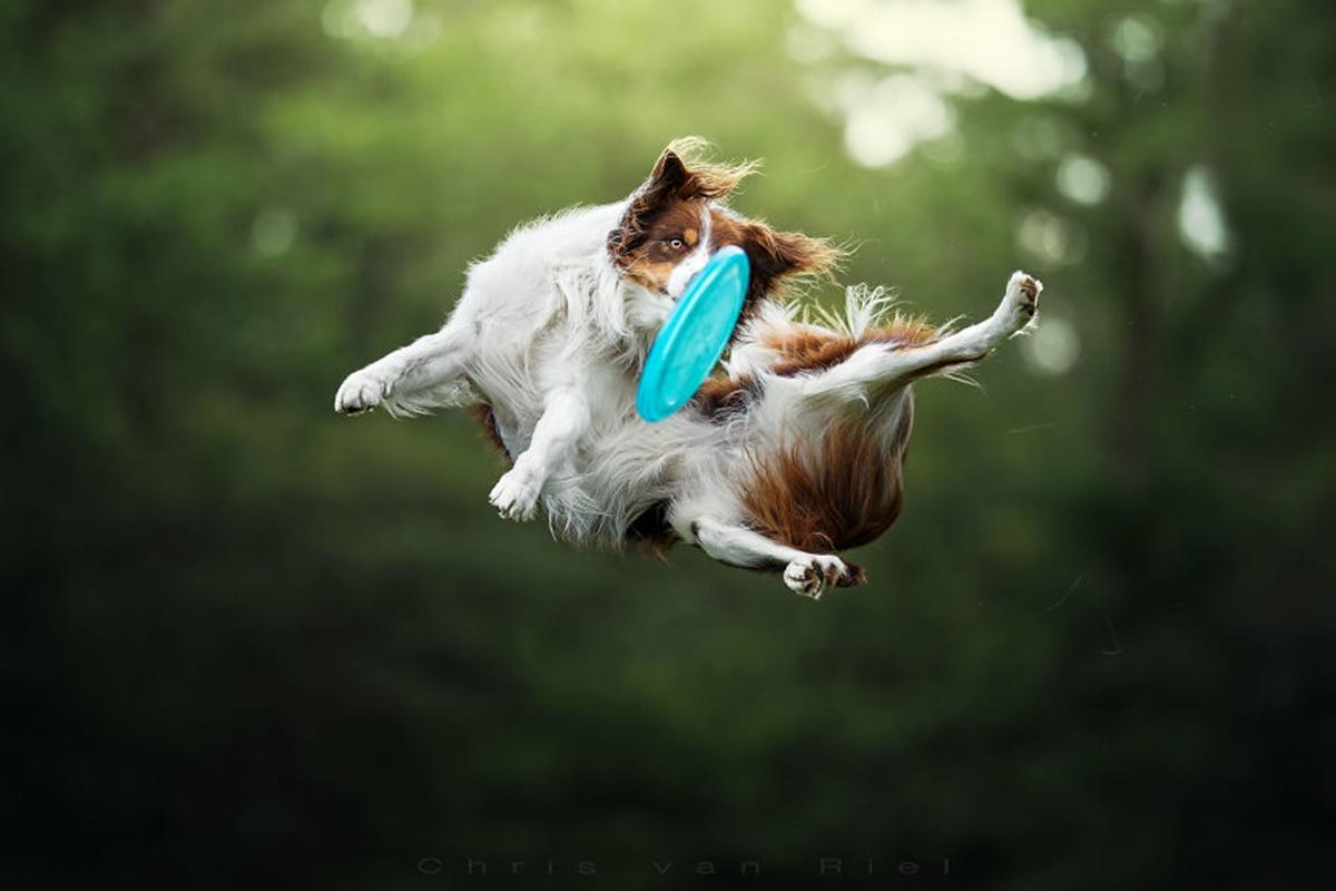 cane rovesciata frisbee