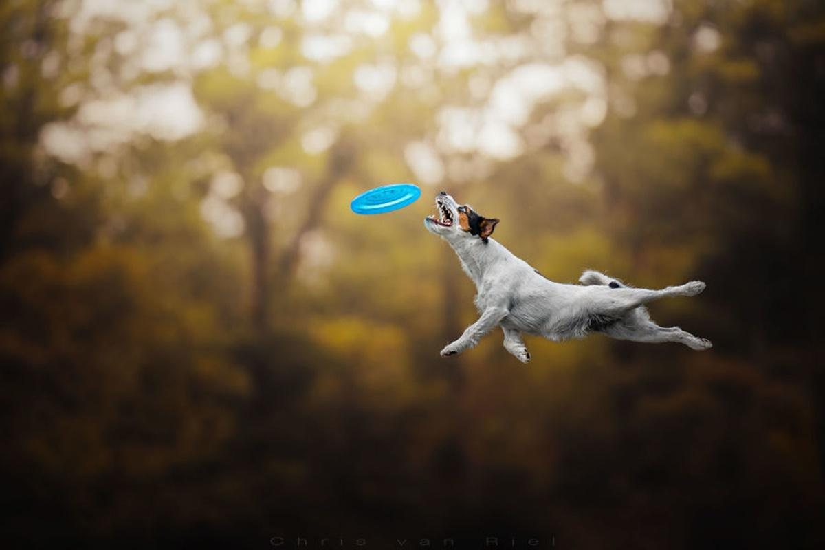 cane salta altissimo