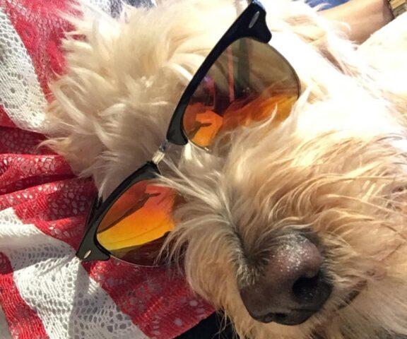 cane con occhiali arancio