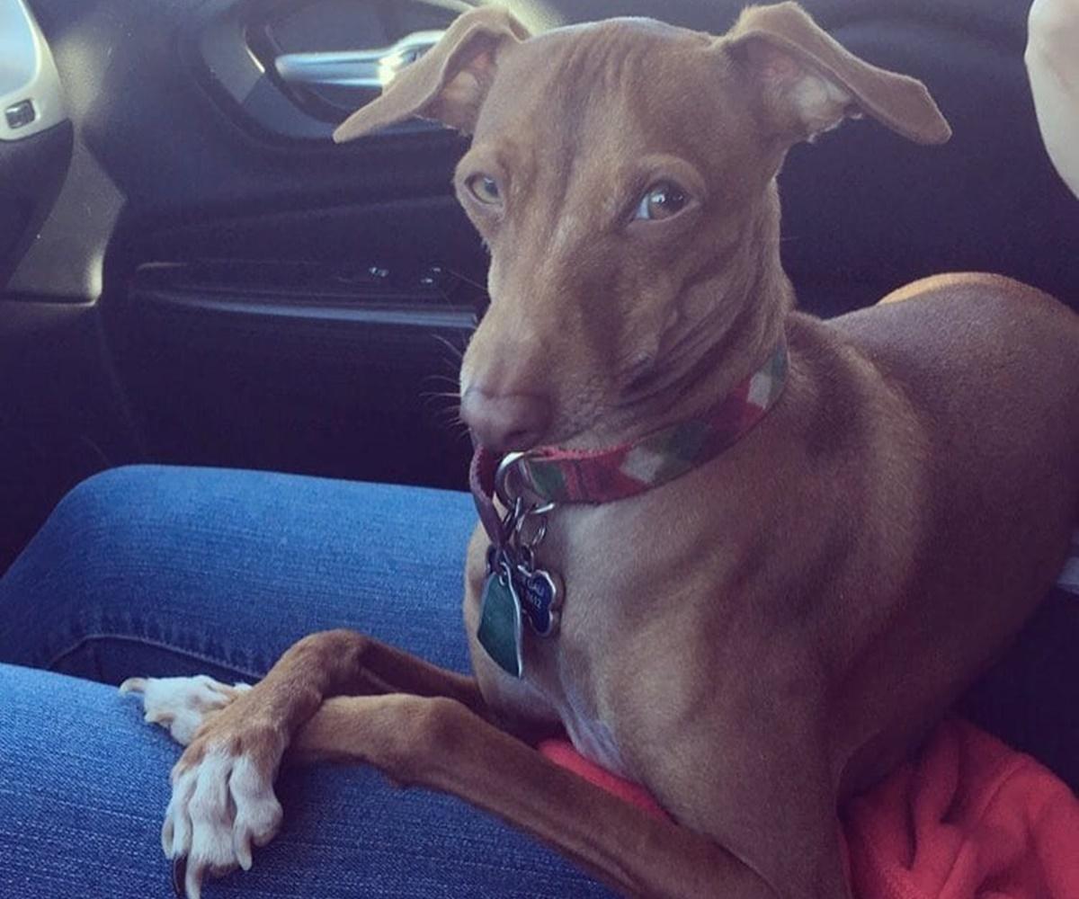 cane ascolta in macchina