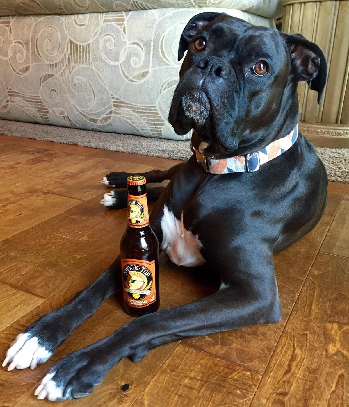 cane con birra
