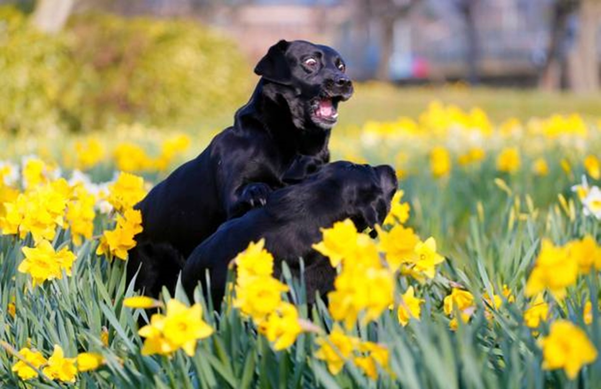 cani con fiori