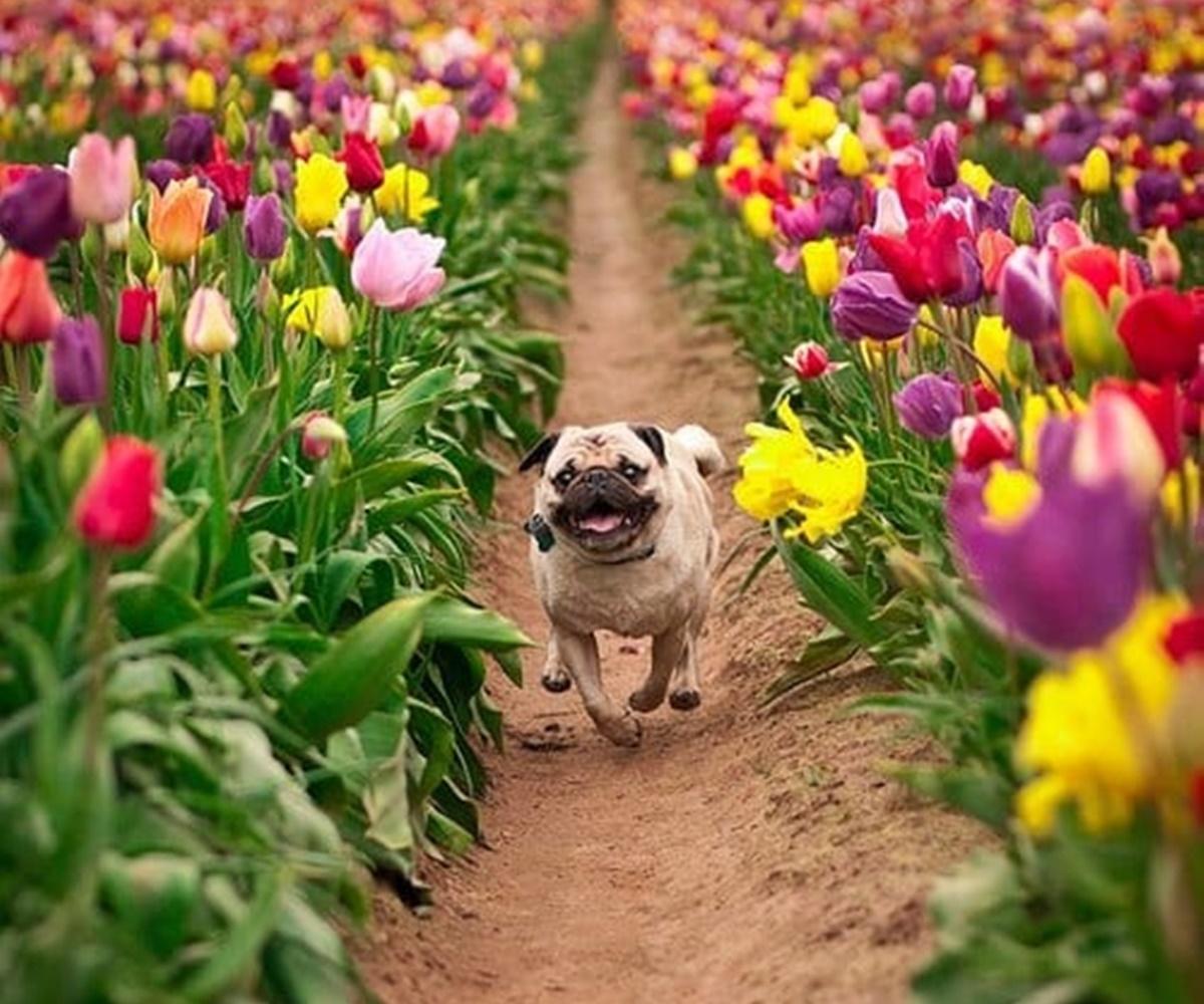 cane in un viale