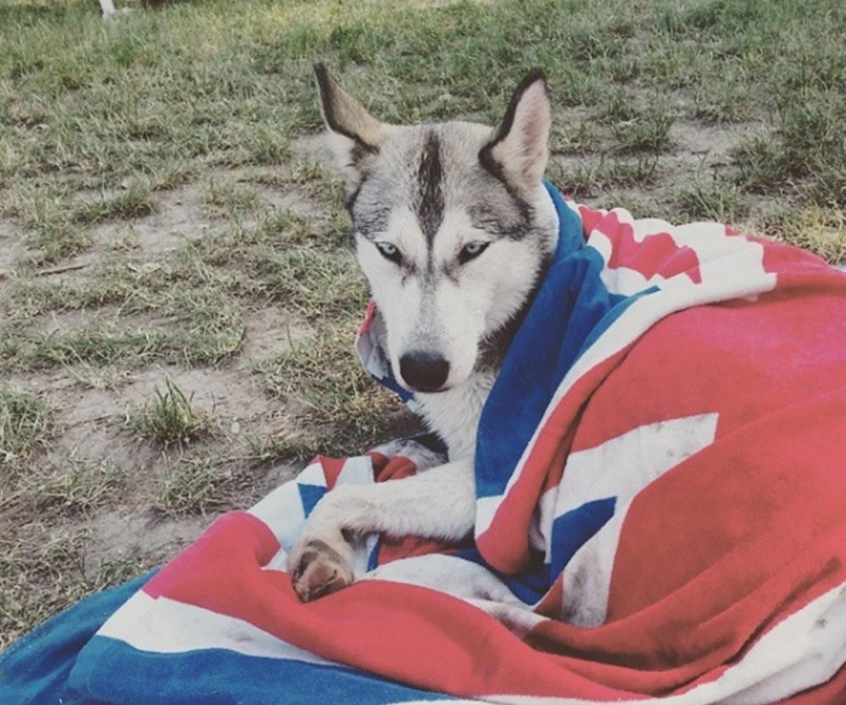 cane con coperta