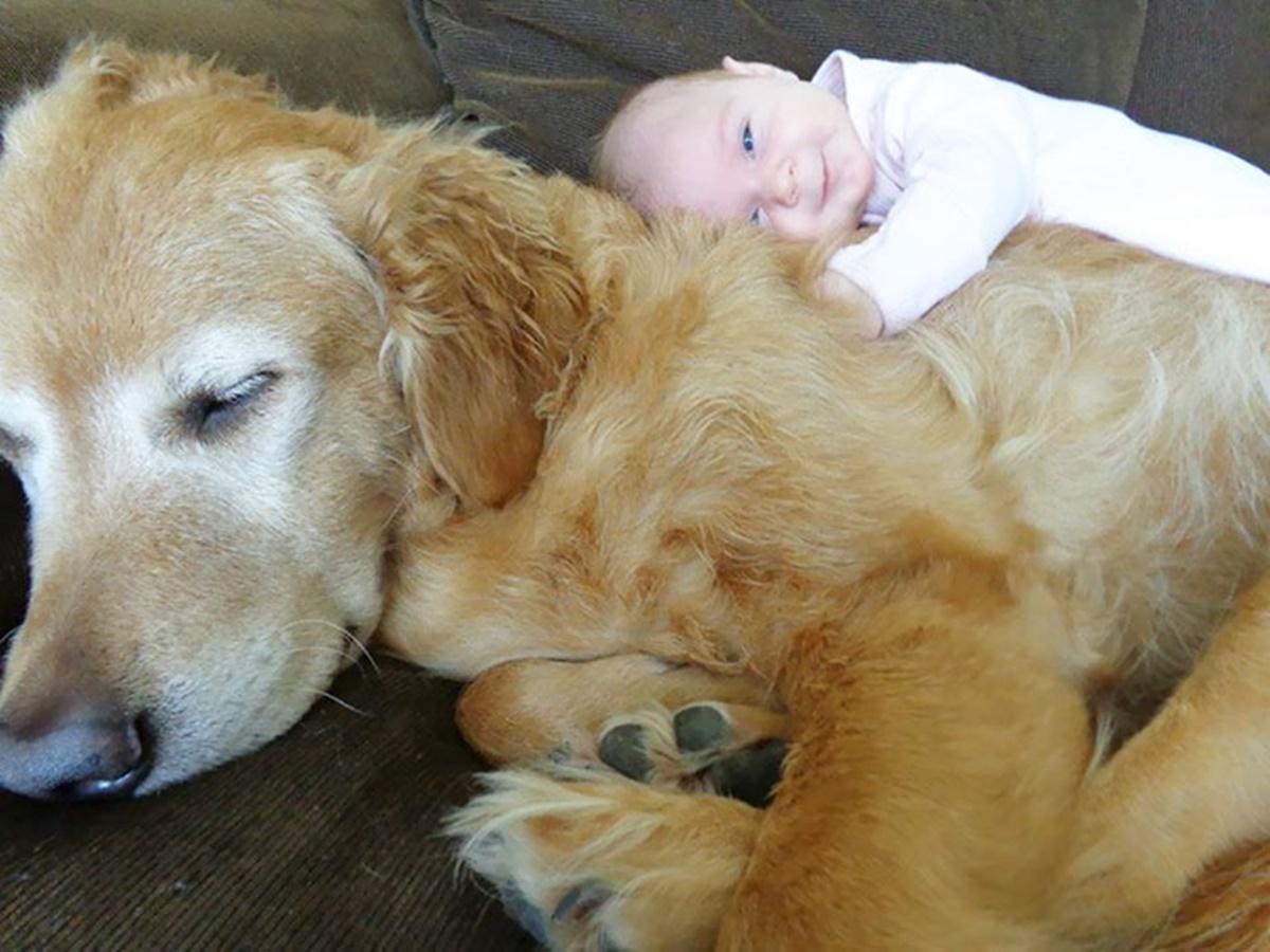 bambino su cane