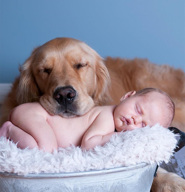 cane con testa su bambino