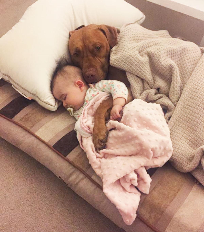 cane addormenta bambina