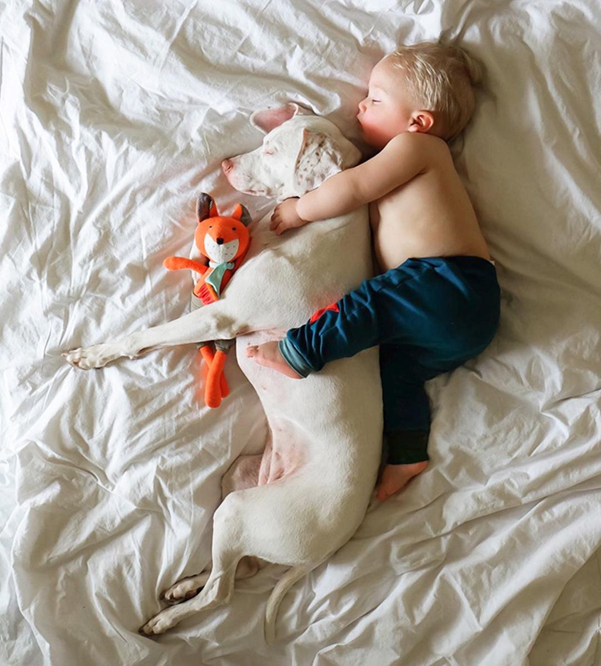 cane bianco e bambino sul letto