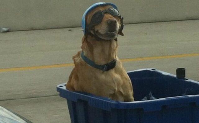 cane con occhialini neri
