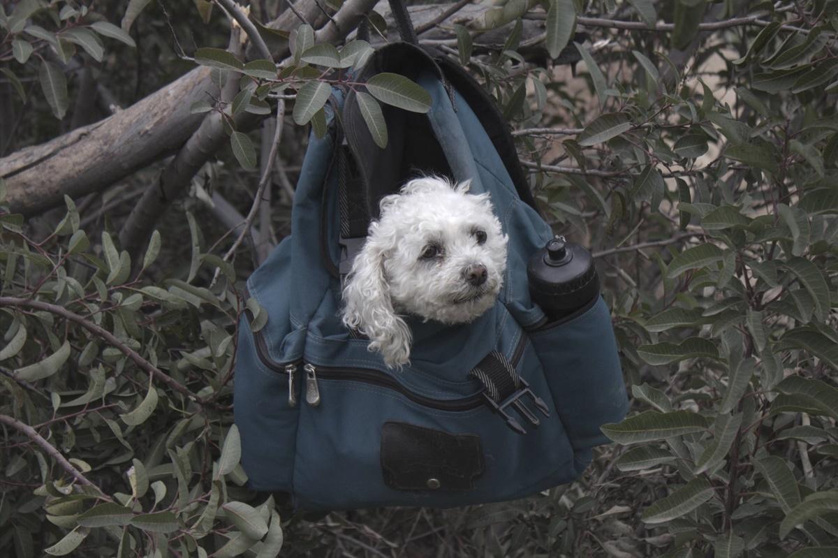 cane sull'albero