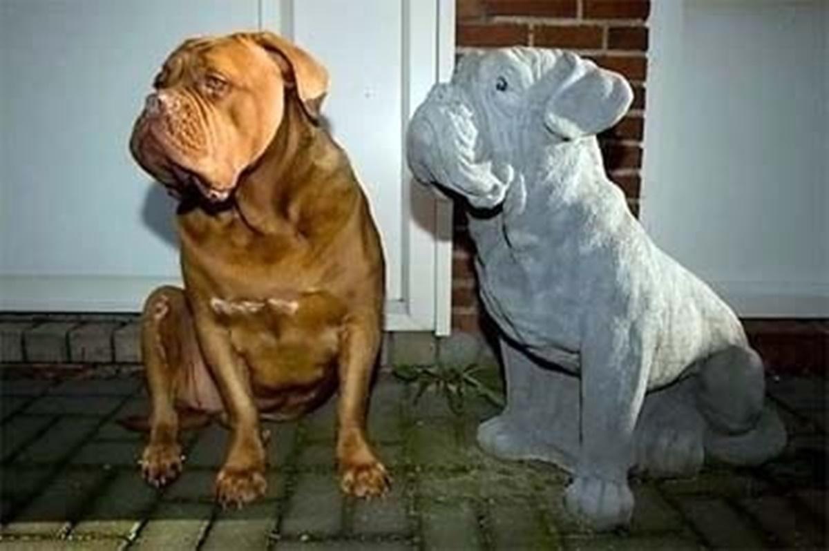 cane con amico di pietra