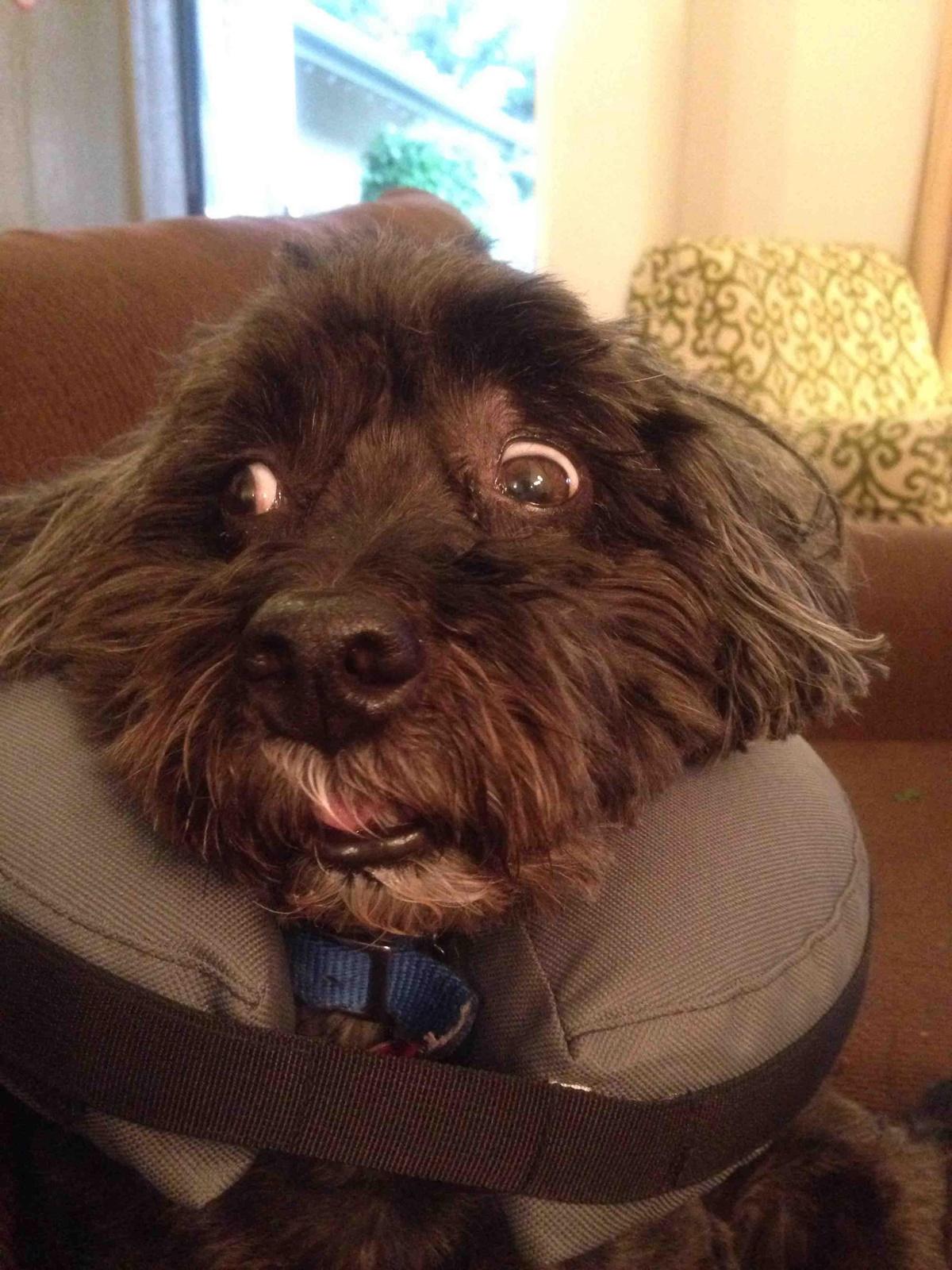 cane sconvolto