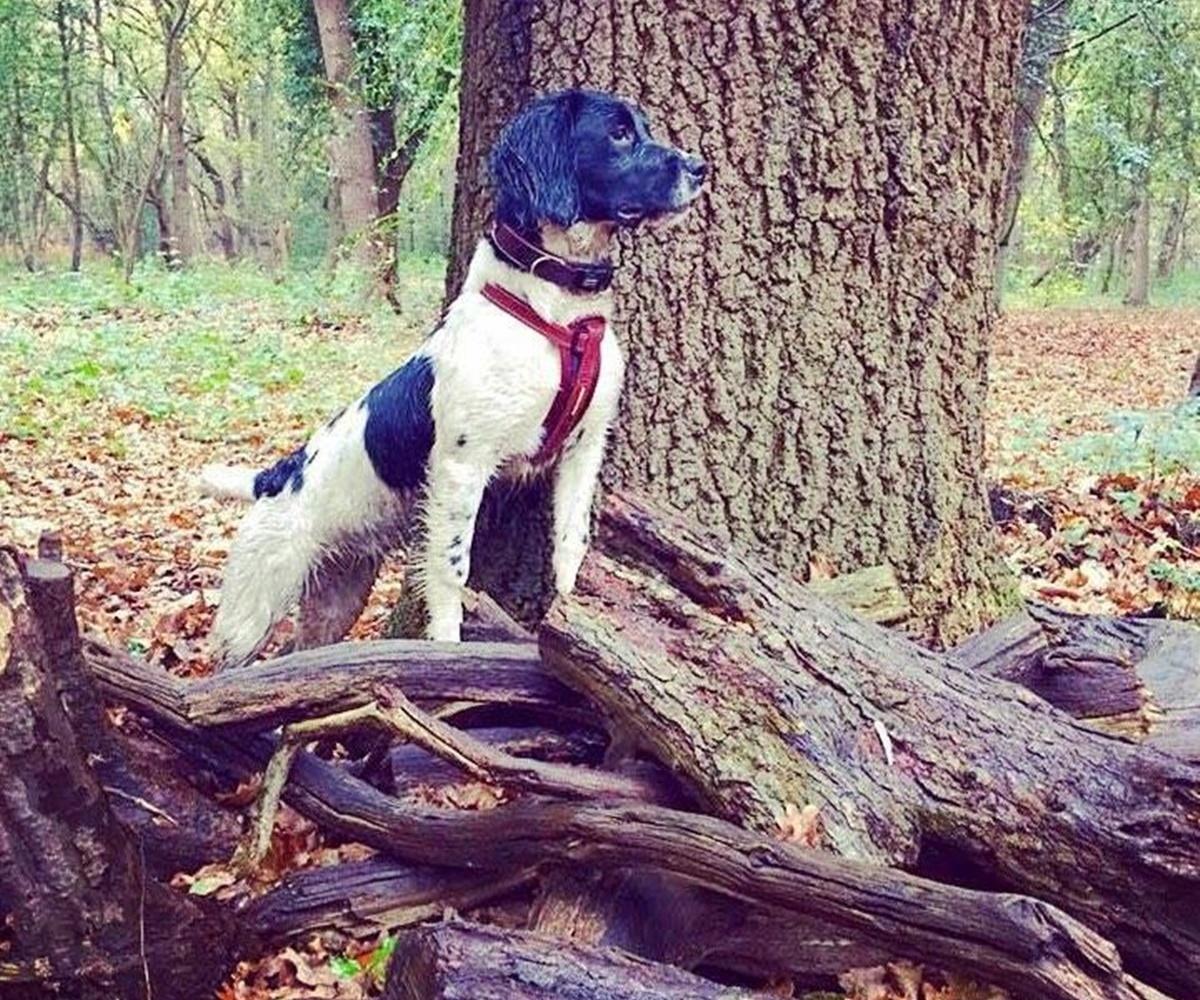cane nel bosco
