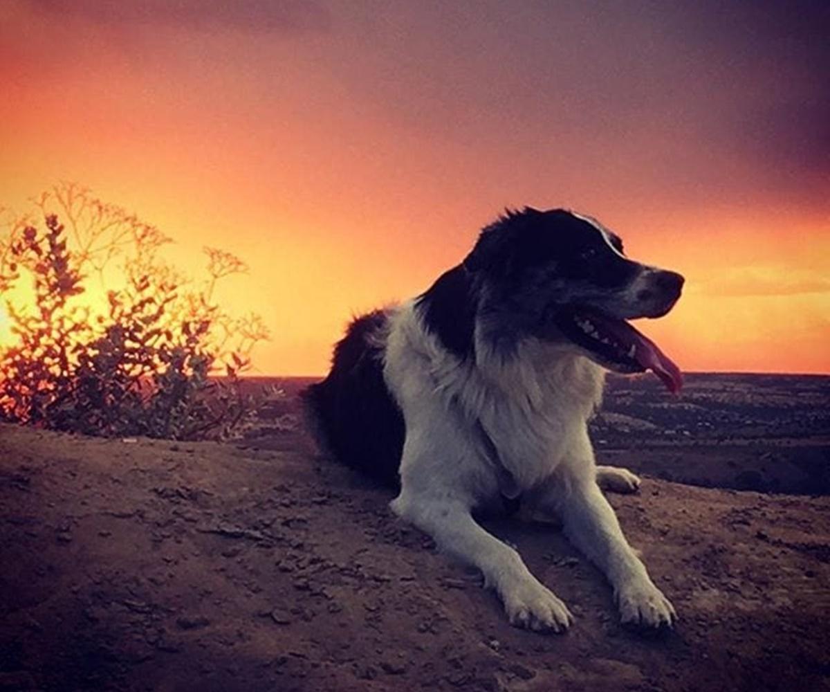 cane su panorama