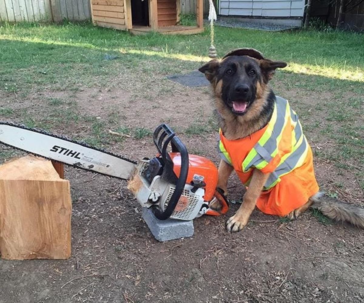 cane taglia albero
