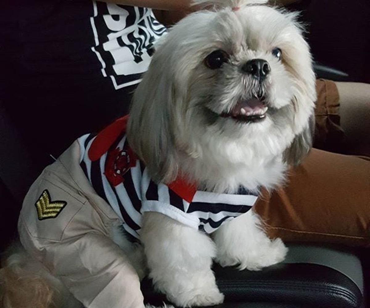 cane marinaio