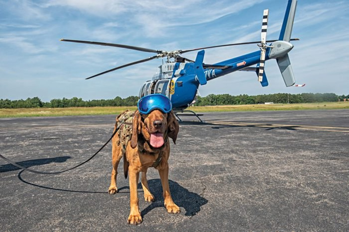 cane con elicottero