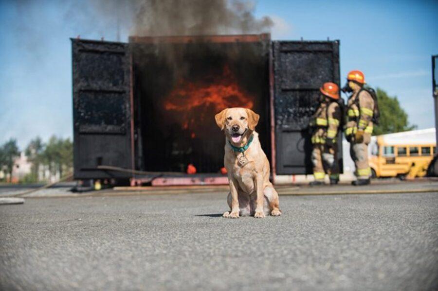 cane con fuoco