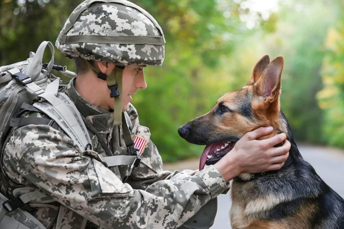 cane militare