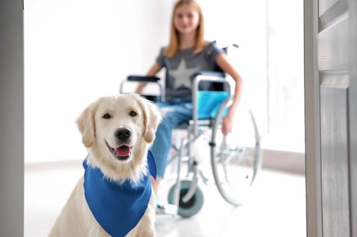 cane da terapia