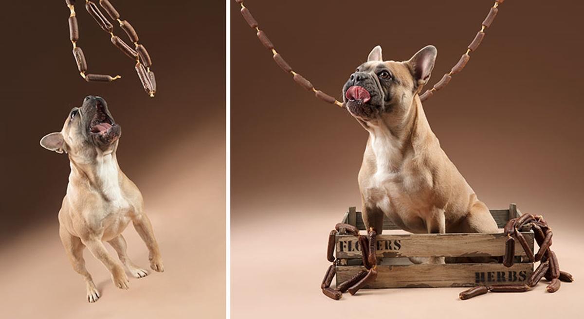 cane con salsicce
