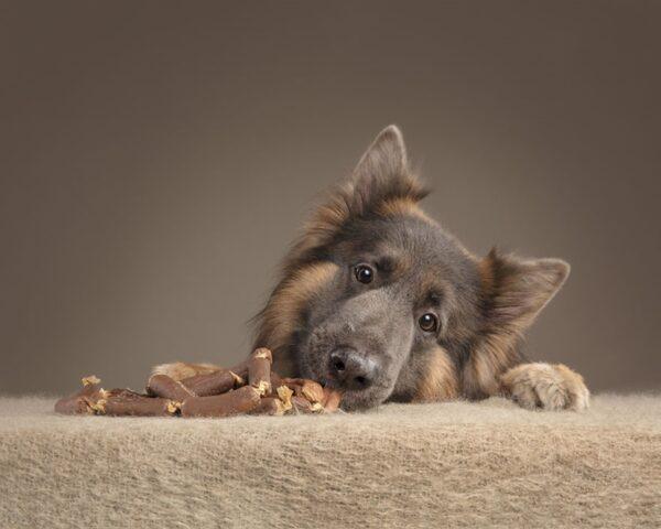 cane con bocconcini seduto