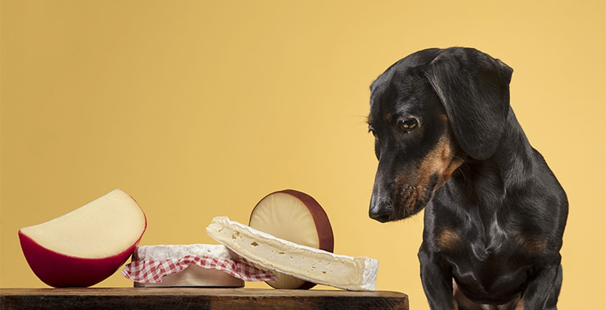 cane formaggi