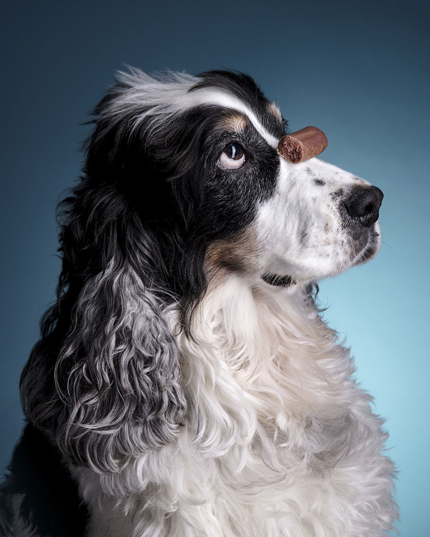 cane croccantino sospeso