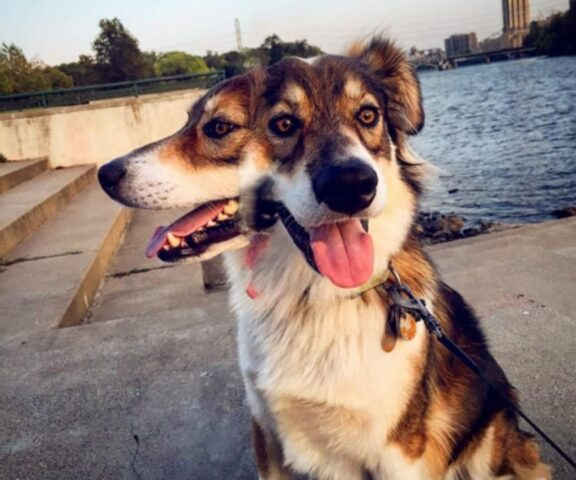 cane doppia testa