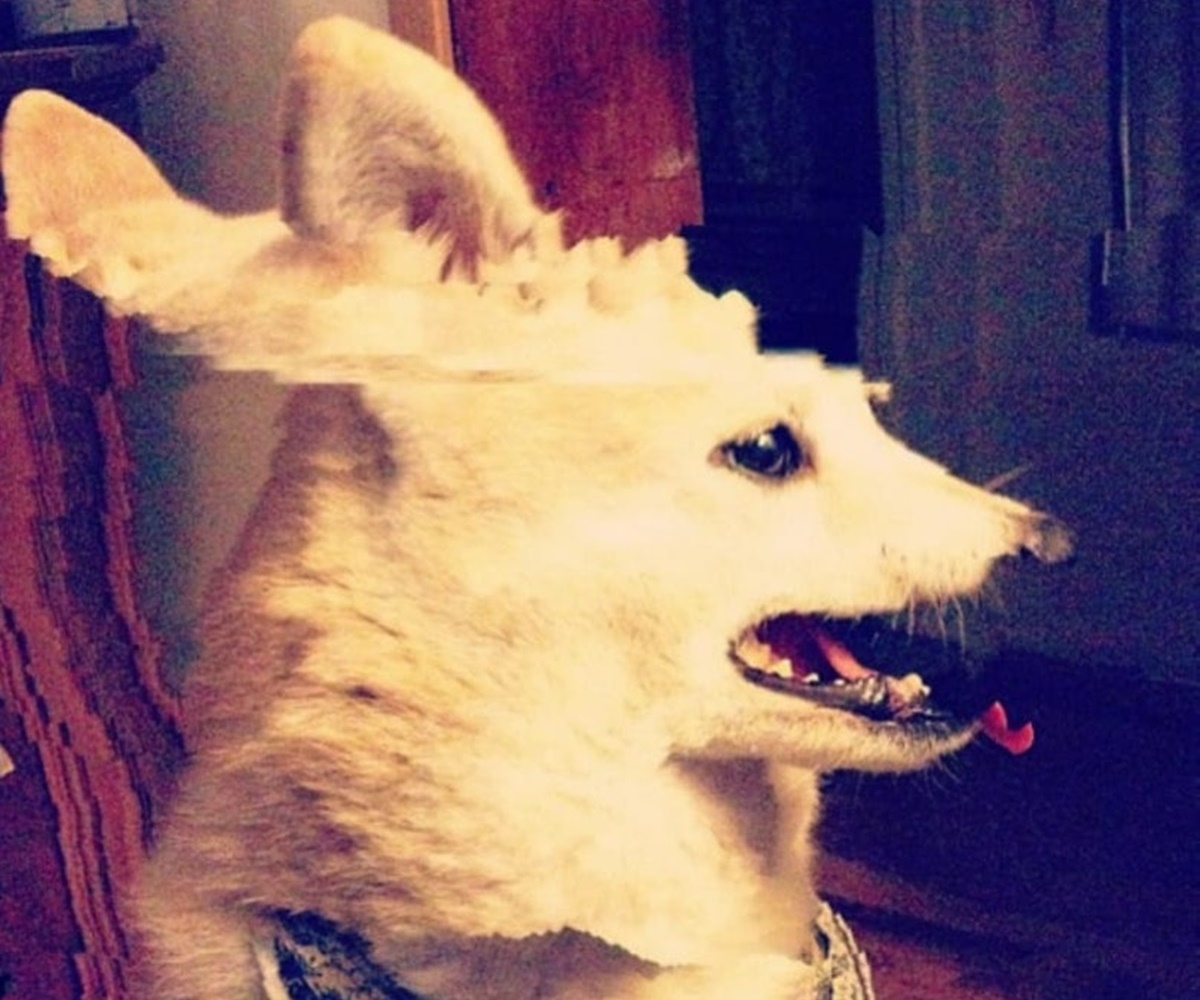 cane con interferenze