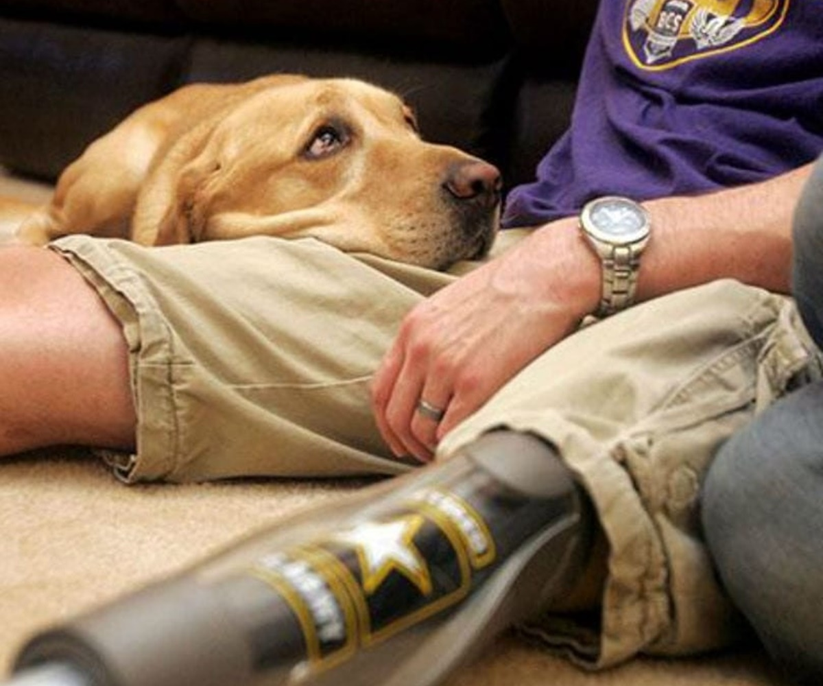 cane con ex soldato