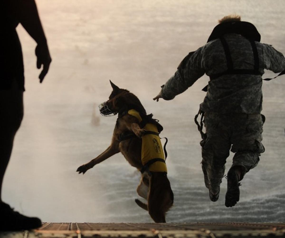 cane salta dall'aereo