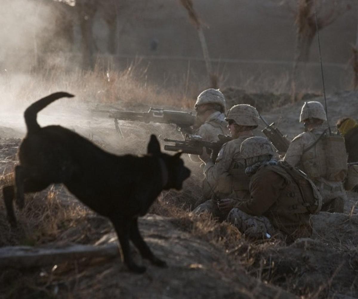 cane incita soldati