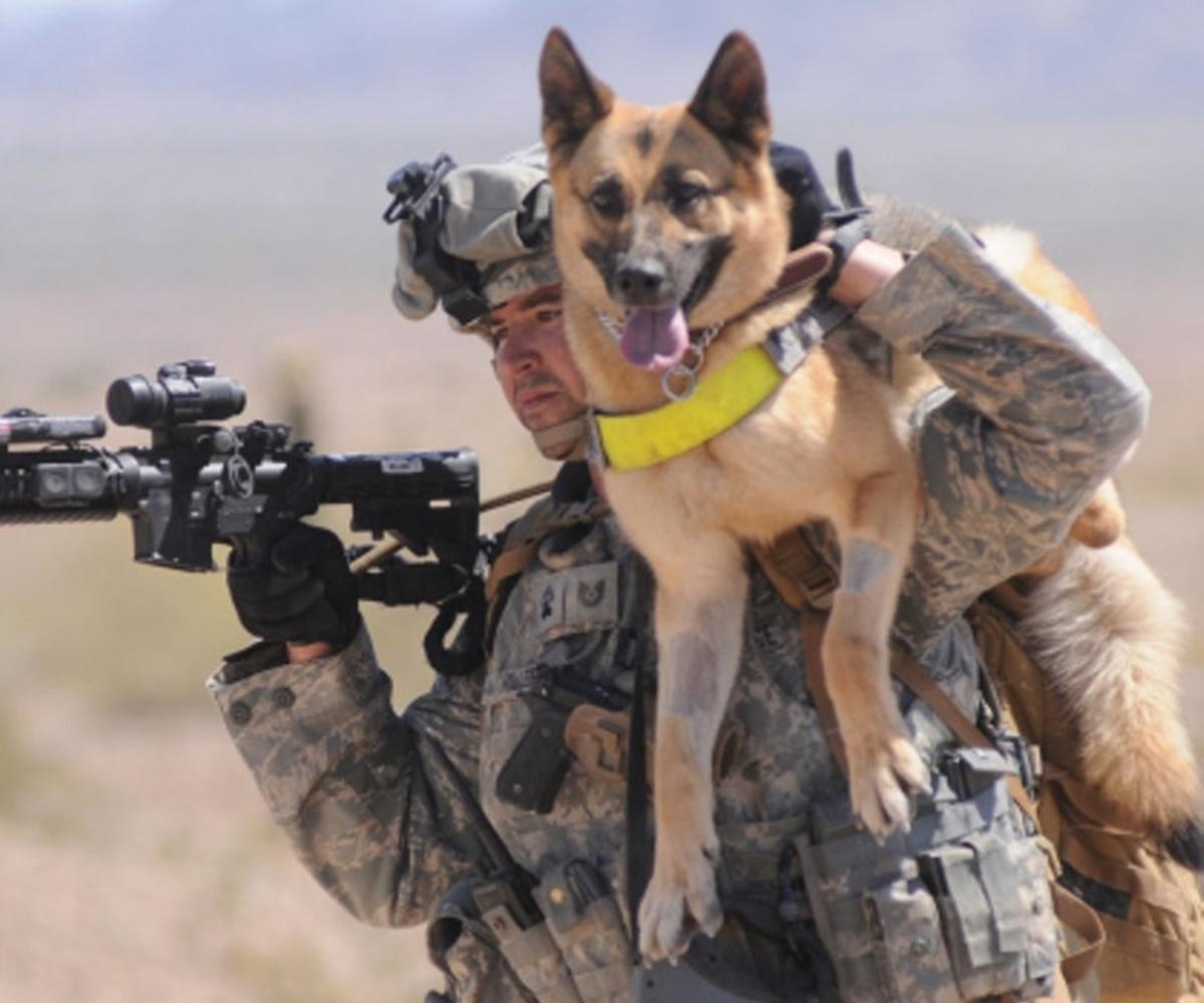 cane in spalla a soldato