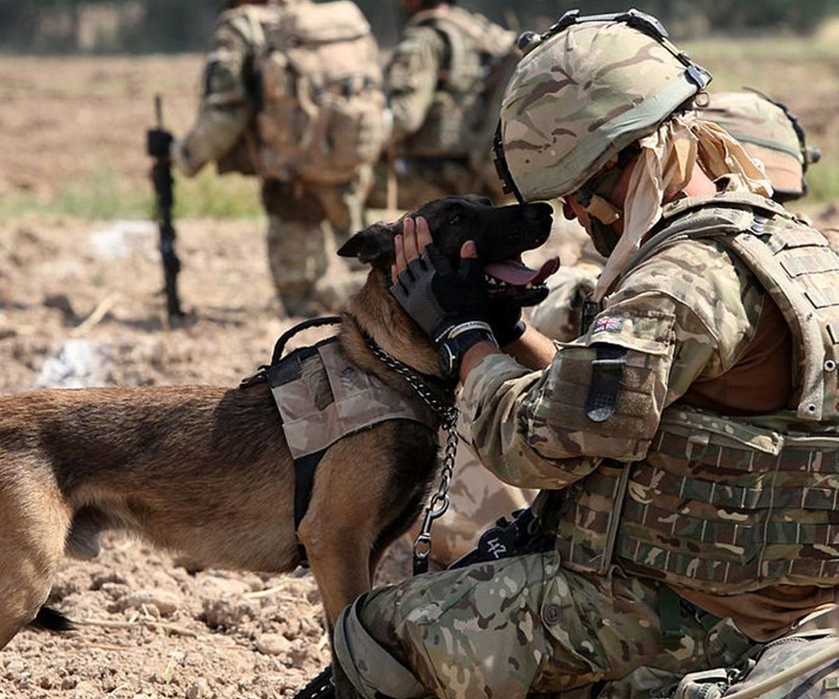 cane con compagna