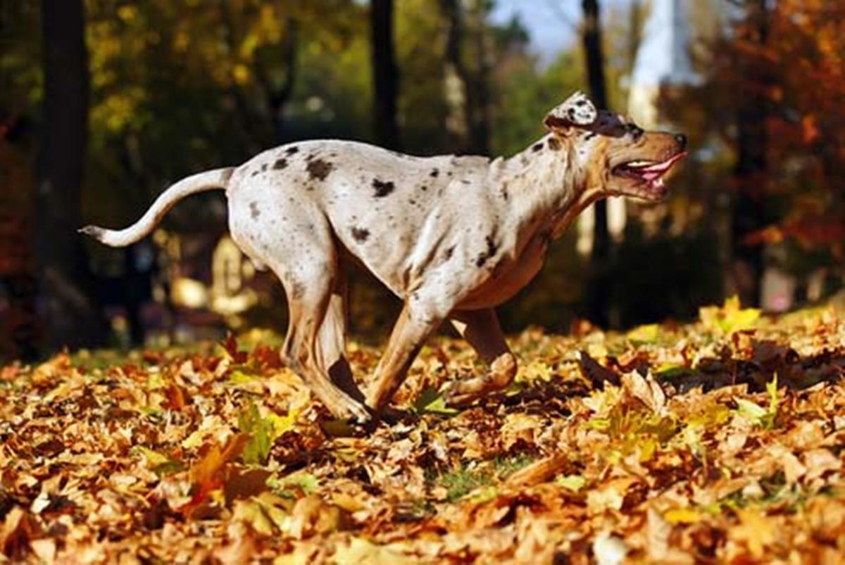 cane corre tra le foglie