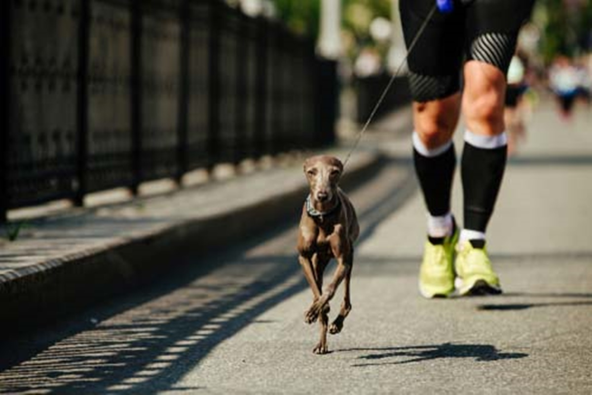 cane corre in strada