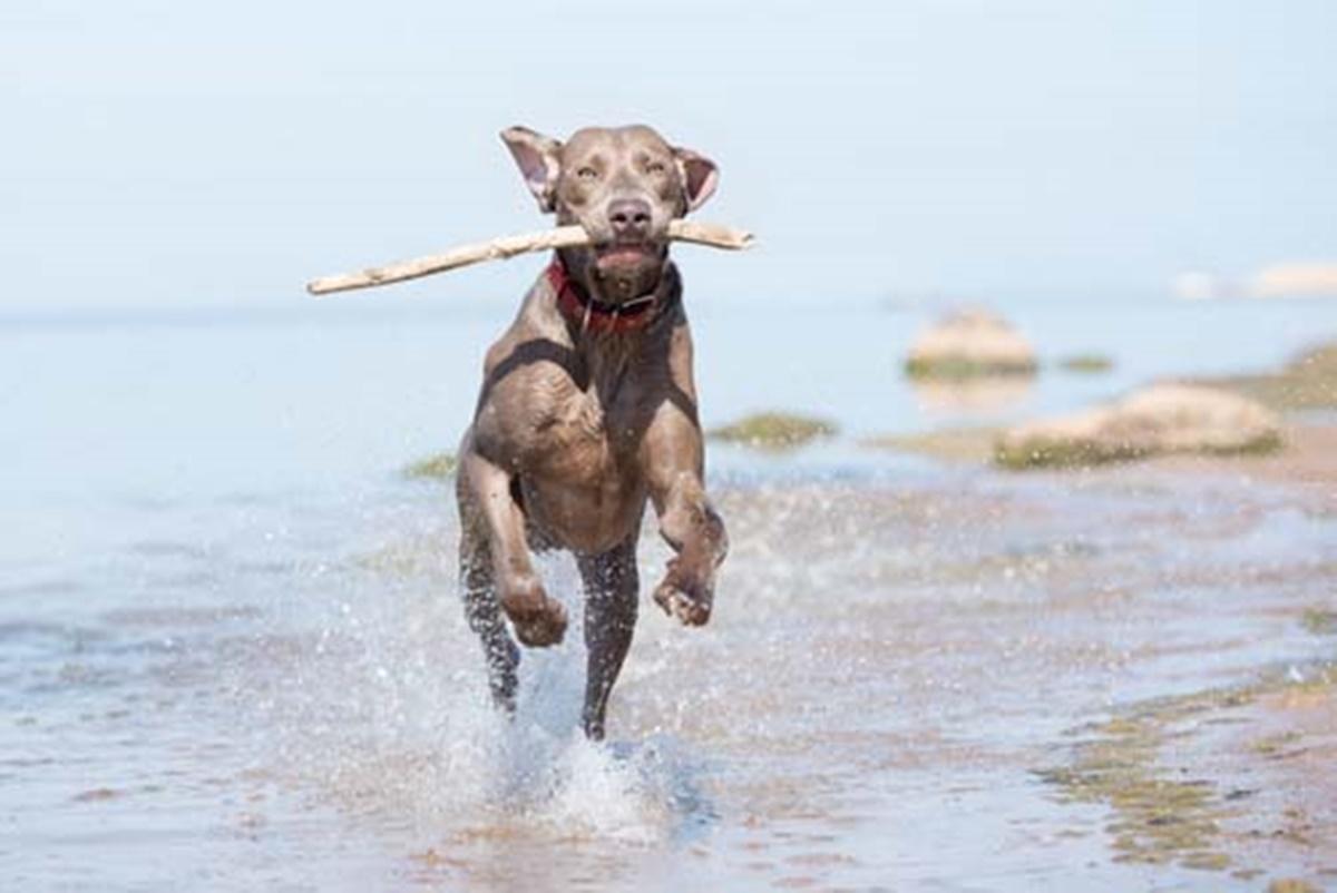 cane corre in acqua