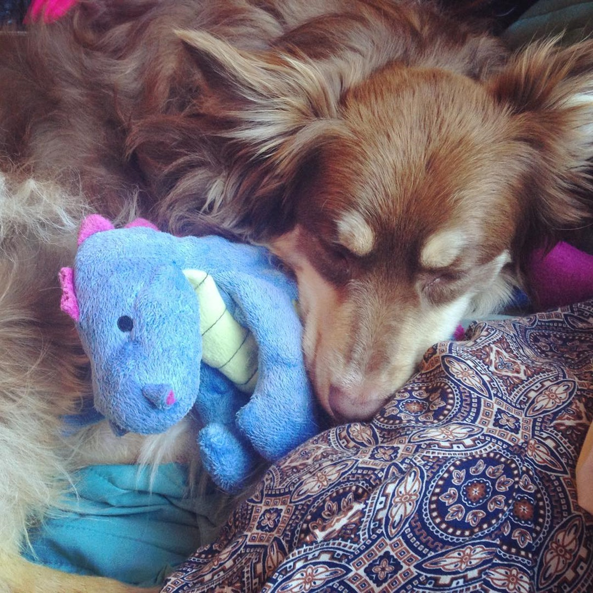 cane dorme con dragoncino