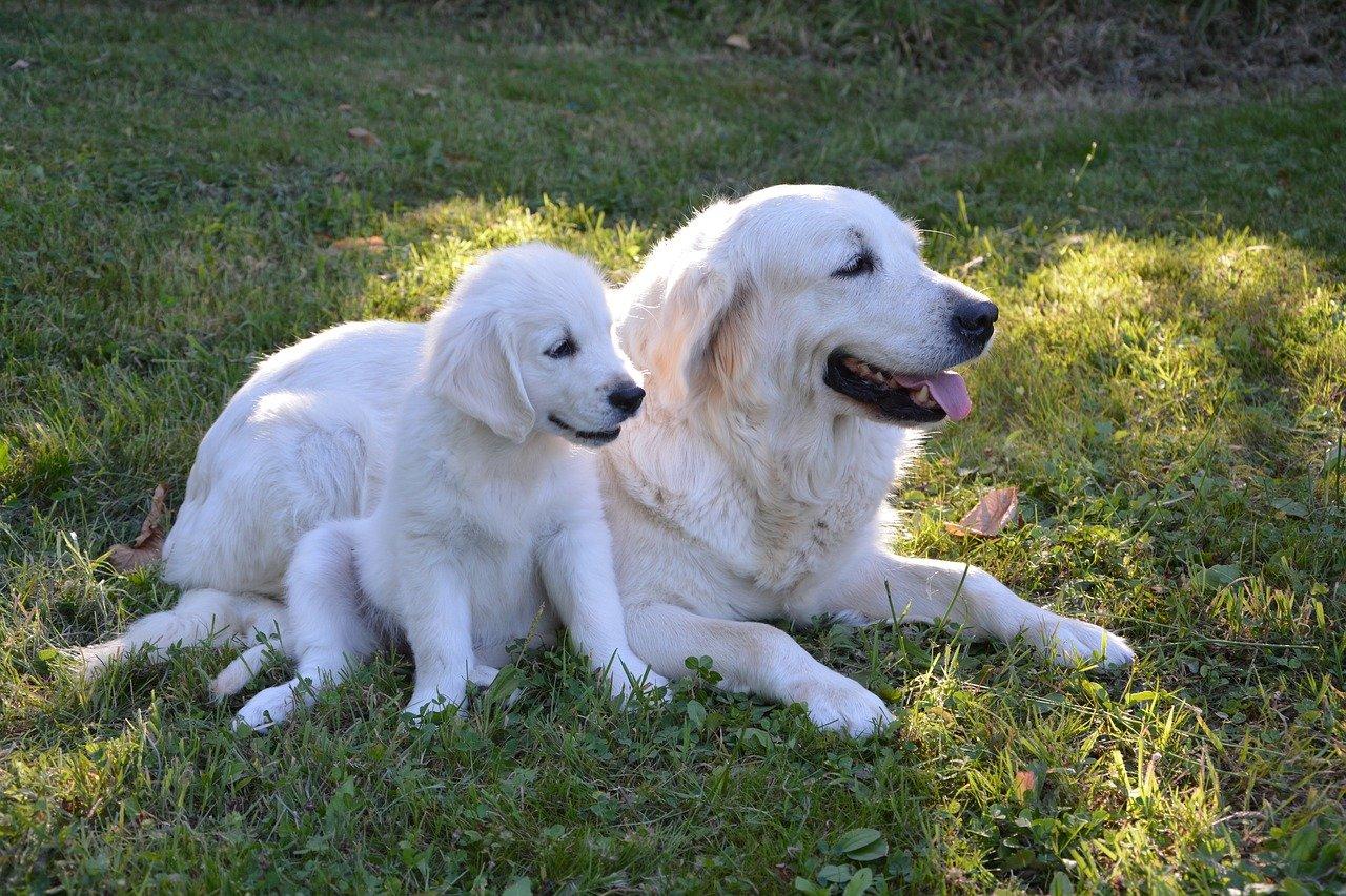 cucciolo di cane con la mamma