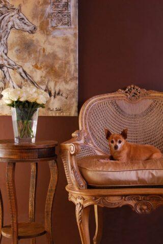 cane in salone