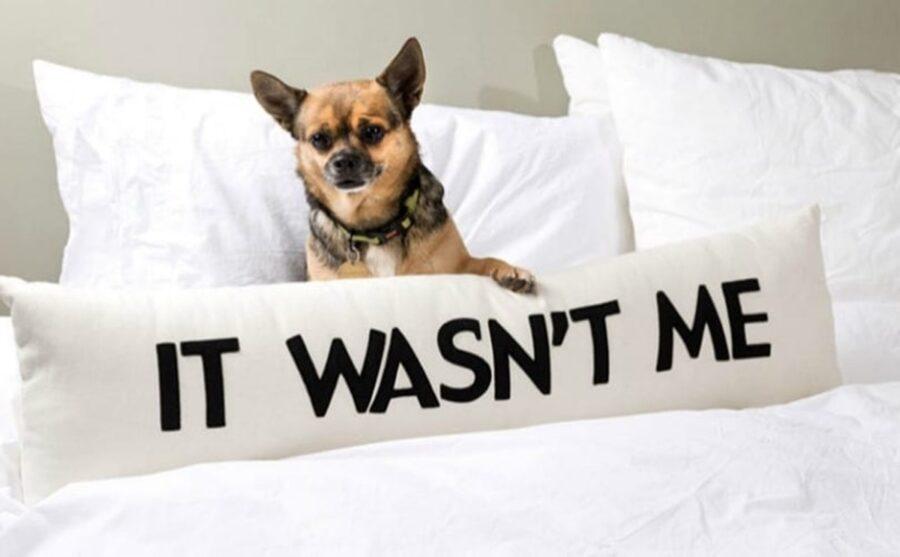 cane con cuscino