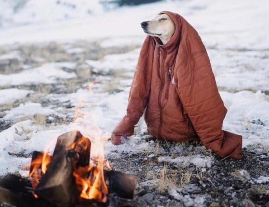 cane fuoco neve giubbino
