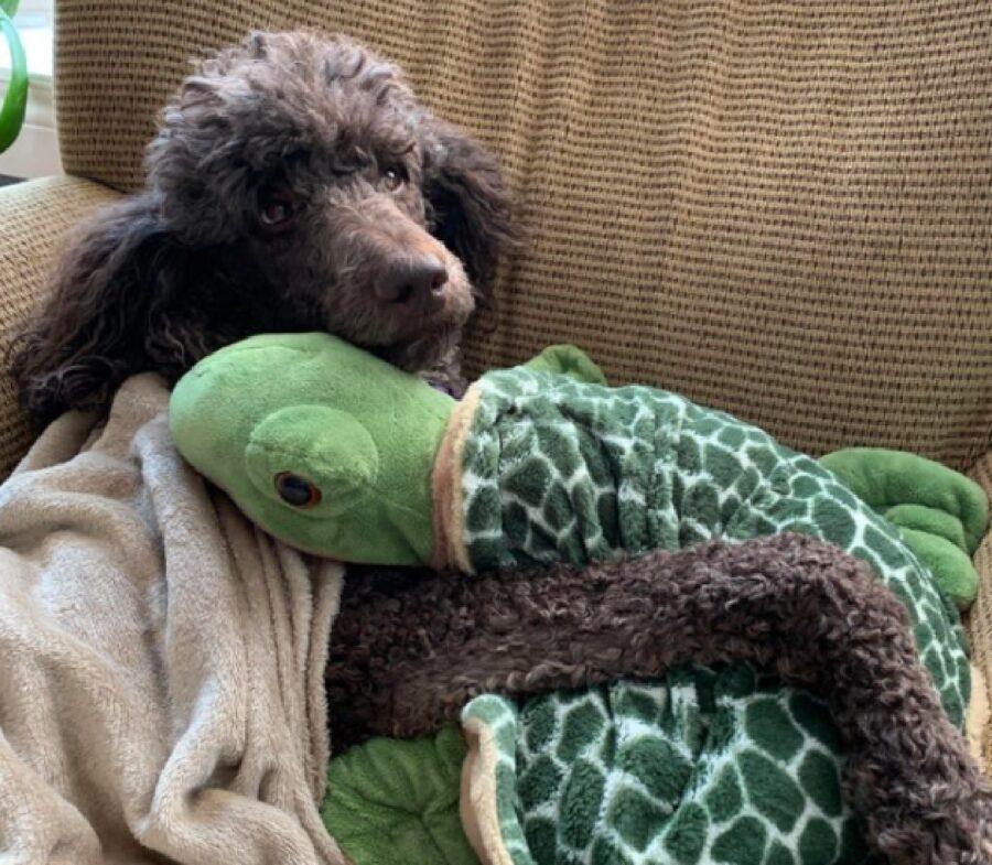 cane tartaruga pupazzo carino