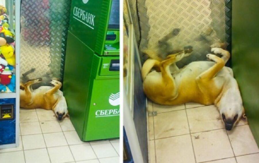 cane troppo stanco dorme negozio