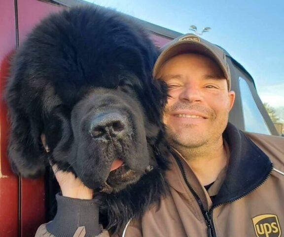 cane grande nero
