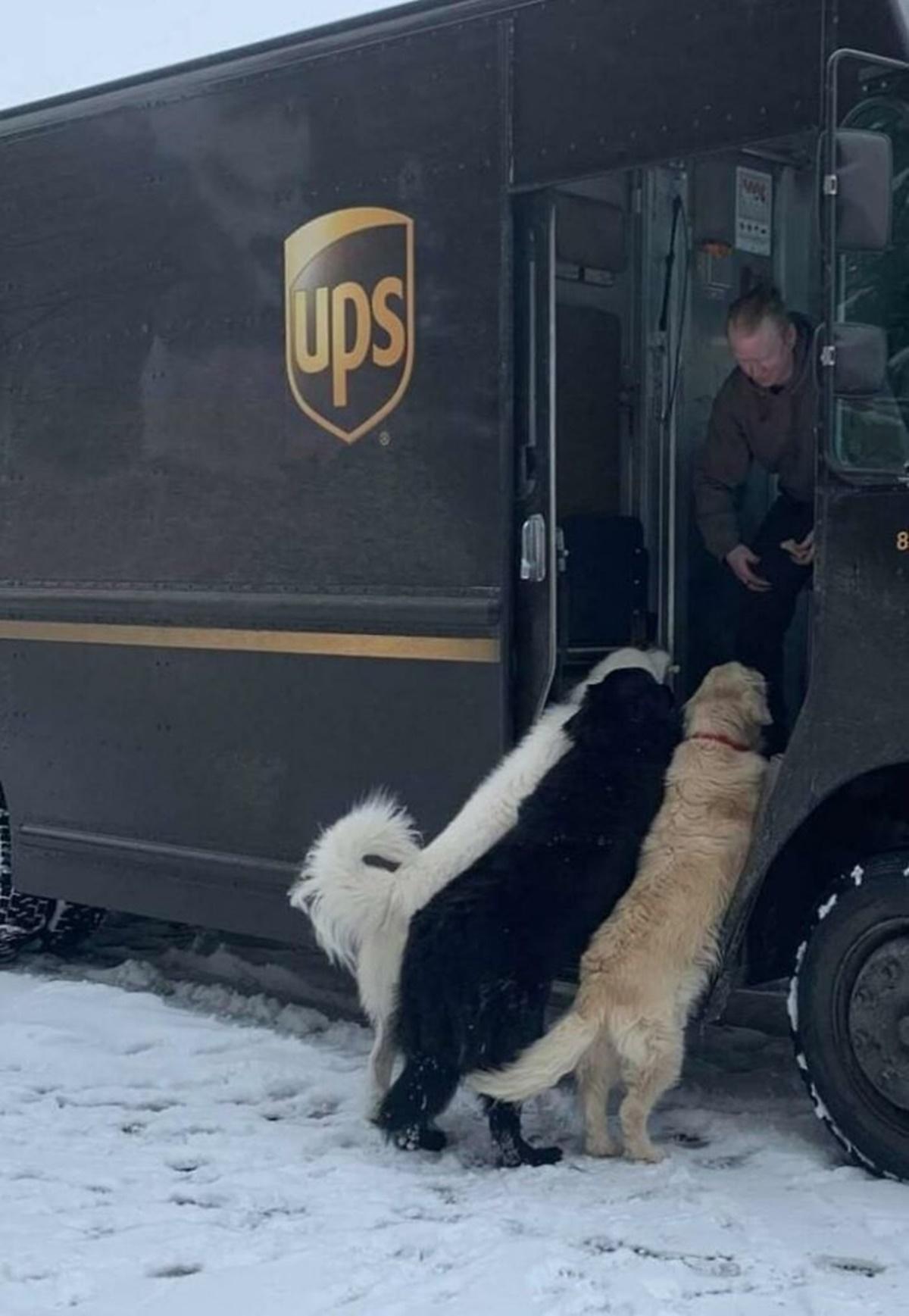 cani sul camion