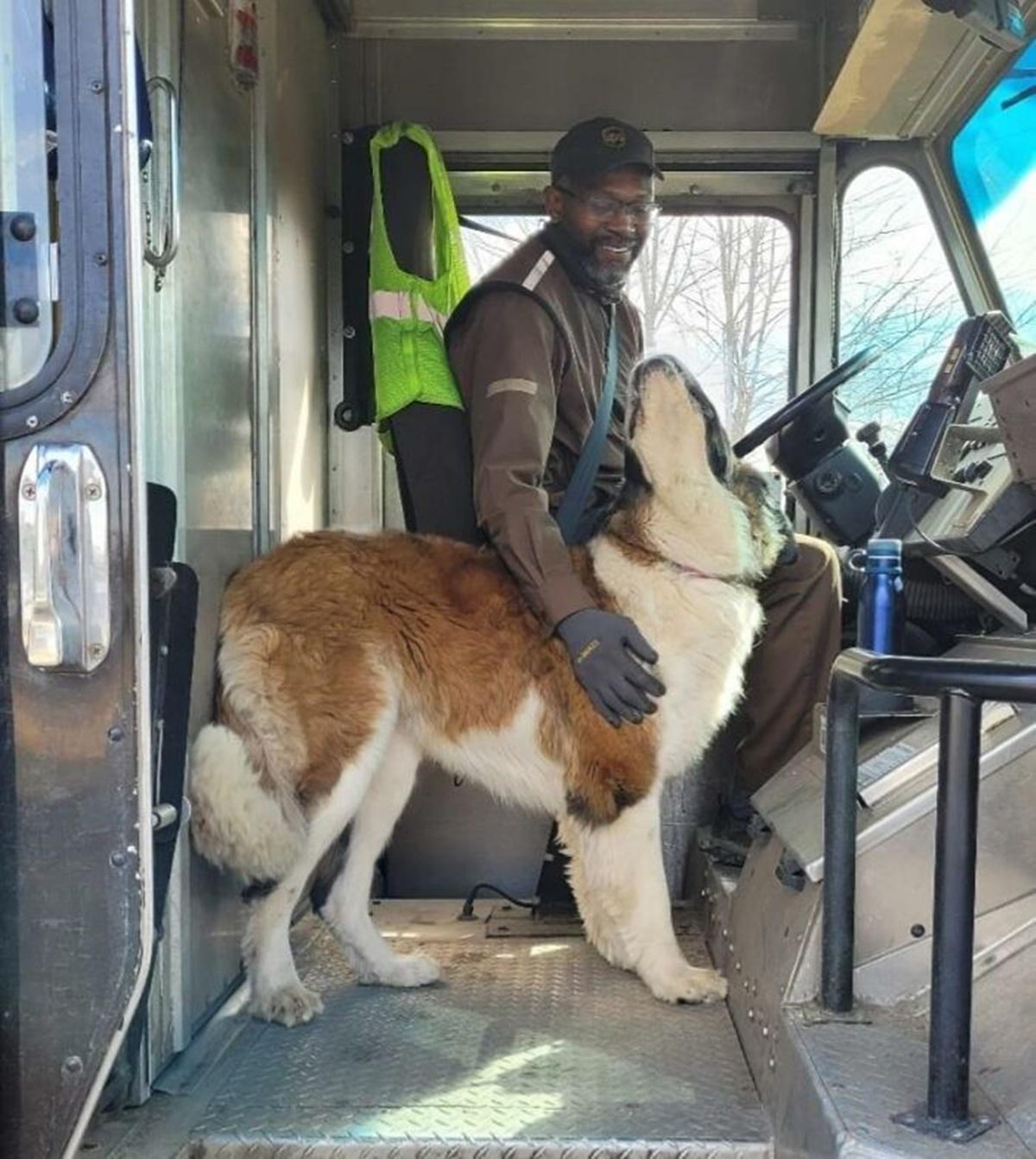 cagnolone saluta corriere